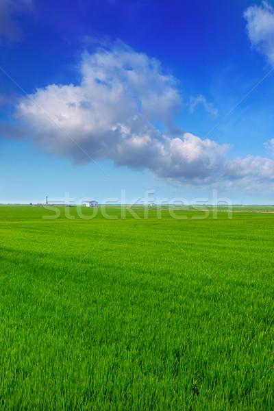 Stock fotó: Valencia · rizs · mezők · zöld · legelő · tavasz