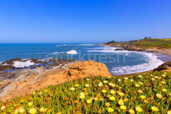 Kalifornia bab üreges tengerpart autópálya útvonal Stock fotó © lunamarina