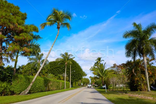 Naples beach streets with palm trees Florida US Stock photo © lunamarina