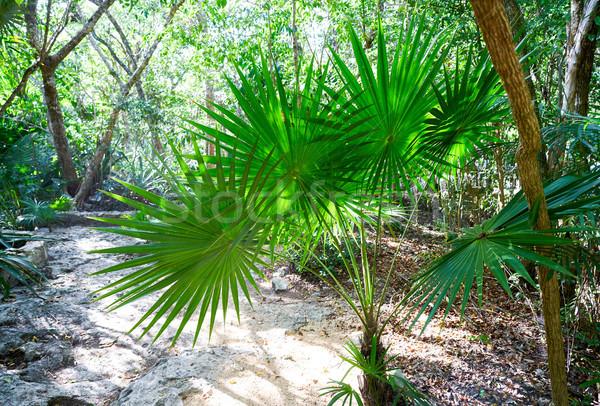 леса джунгли Мексика деревья лет листьев Сток-фото © lunamarina