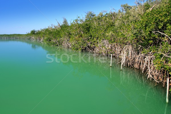 lagoon mangrove shore Mayan Riviera Stock photo © lunamarina