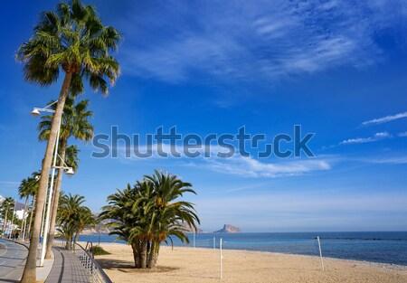 Praia tenerife sul canárias árvore natureza Foto stock © lunamarina