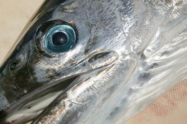 Mediterrânico cabeça praia céu cara peixe Foto stock © lunamarina