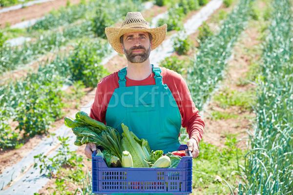 Landbouwer man oogst groenten boomgaard middellandse zee Stockfoto © lunamarina