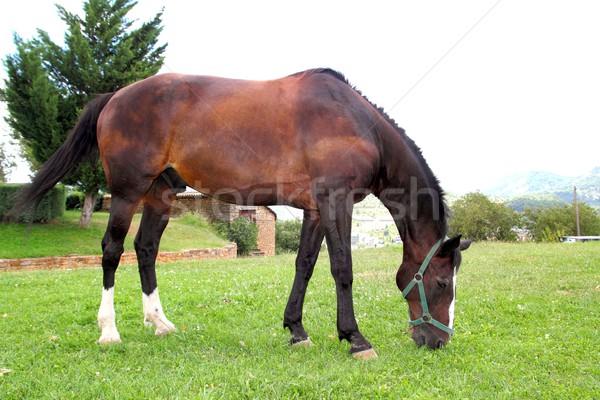 horse stand eating grazing prairie in Pyrenees Stock photo © lunamarina