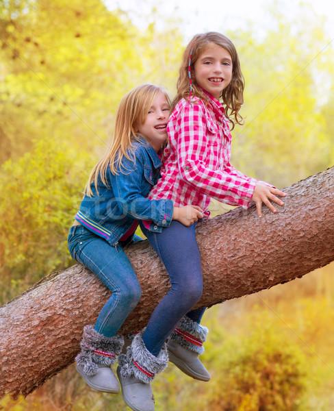 孩子 朋友 女孩 攀登 松樹 商業照片 © lunamarina