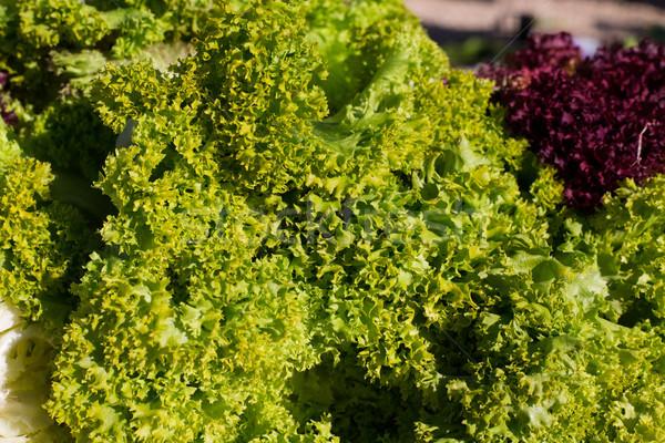 endive lettuce vegetables green and purple Stock photo © lunamarina