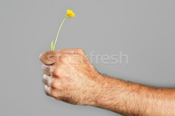 Concept and contrast of hairy man hand and flower Stock photo © lunamarina