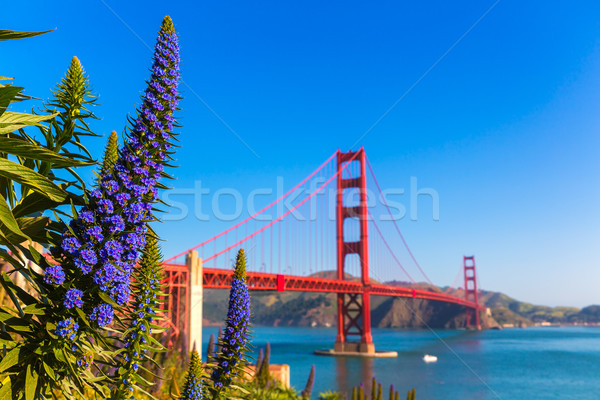 Golden Gate Bridge San Francisco lila Blumen Kalifornien Himmel Stock foto © lunamarina