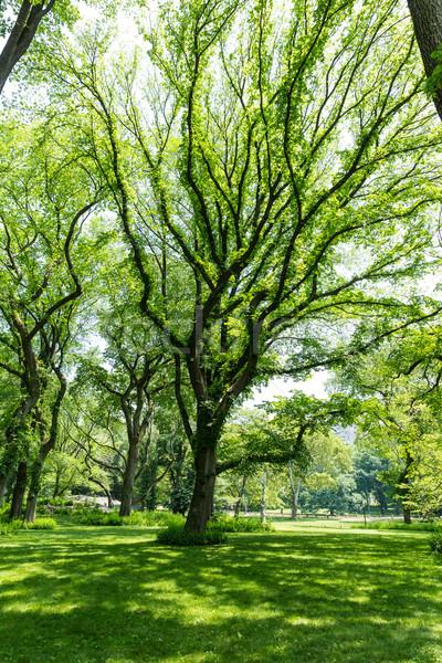 Central Park shopping manhattan Nova Iorque céu natureza Foto stock © lunamarina