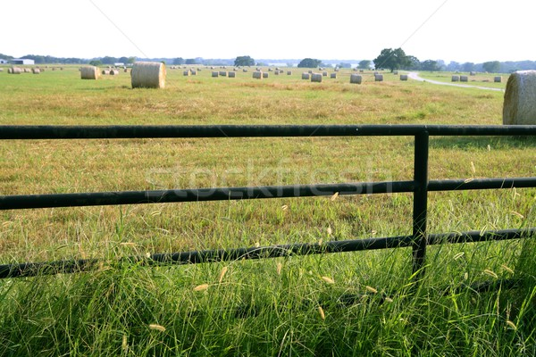 Meadow grasslands farm round bales in Texas Stock photo © lunamarina