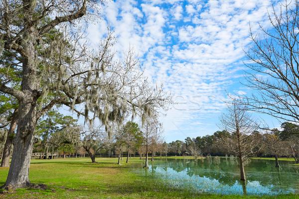 Parque Houston Texas nubes naturaleza luz Foto stock © lunamarina