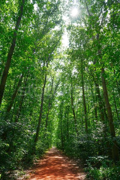 ユネスコ 自然 公園 ドイツ 木材 森林 ストックフォト © lunamarina