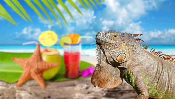 Iguana on Mexico tropical beach cocktail coconut Stock photo © lunamarina