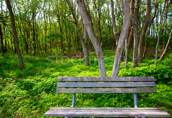 Lonely weathered bench at the jungle forest park Stock photo © lunamarina
