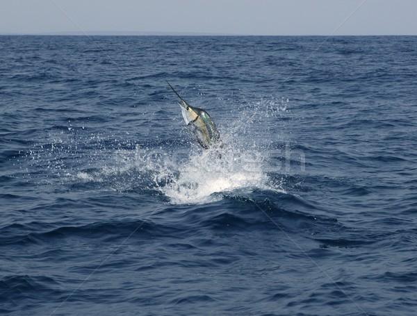 Sósvízi sport halászat ugrik tengerpart víz Stock fotó © lunamarina