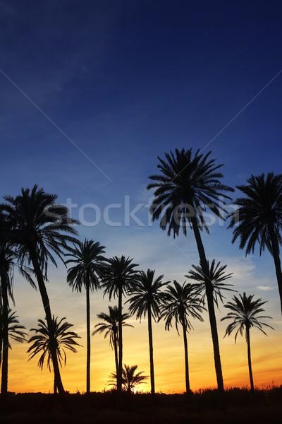 Palmiers coucher du soleil or ciel bleu rétroéclairage Photo stock © lunamarina