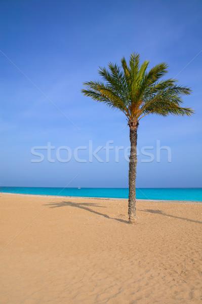 Mediterranean palm tree in Playa del Paraiso villajoyosa Stock photo © lunamarina