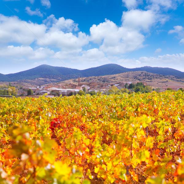 Aragon Paniza autumn golden red vineyard in Zaragoza Stock photo © lunamarina
