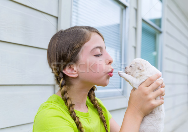 Stock photo: Girl playing with puppy chihuahua pet dog