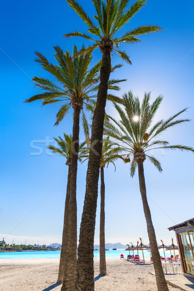 Platja de Alcudia beach in Mallorca Majorca Stock photo © lunamarina
