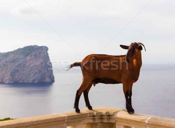 Majorca goat in Formentor Cape Lighthouse Stock photo © lunamarina
