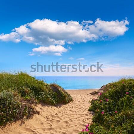 Cape cod praia Massachusetts EUA água Foto stock © lunamarina