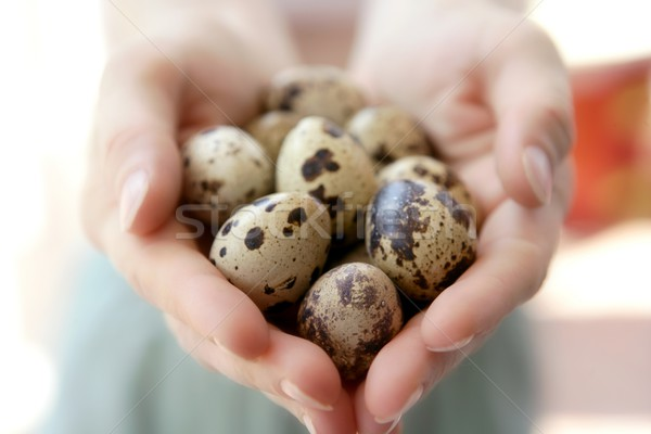 Woman hands holding fragile quail eggs Stock photo © lunamarina
