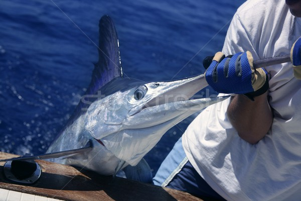 Billfish white Marlin catch and release on boat Stock photo © lunamarina