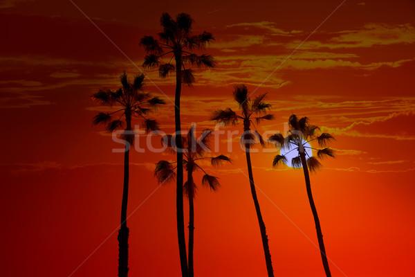 Kaliforniya yüksek palmiye ağaçları gün batımı gökyüzü ağaç Stok fotoğraf © lunamarina