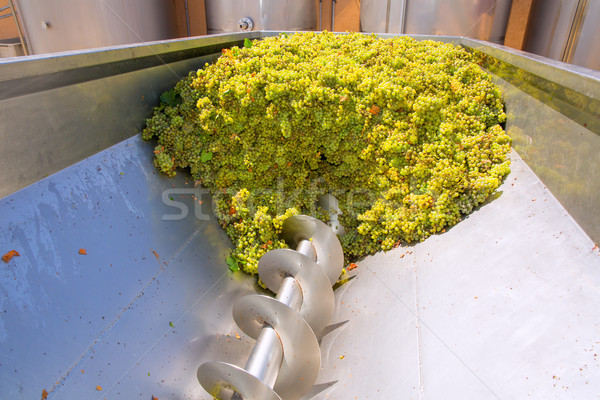 chardonnay corkscrew crusher destemmer in winemaking Stock photo © lunamarina