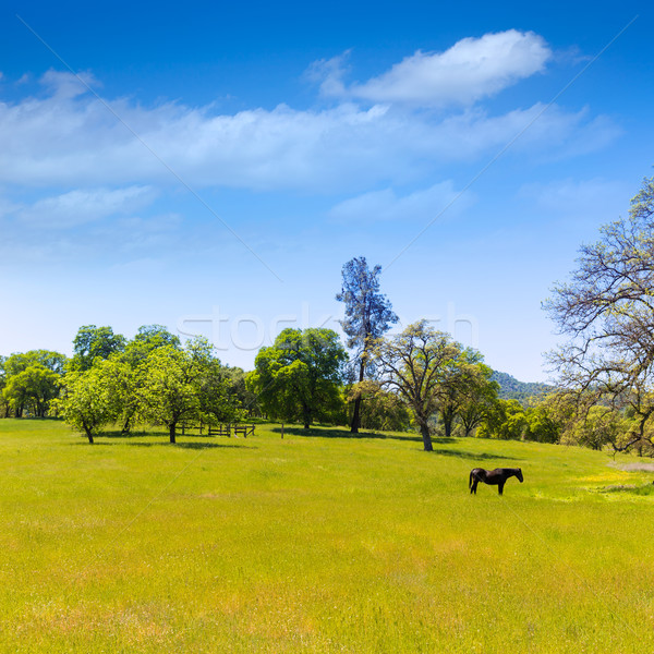 Dark horse in California meadows grasslands Stock photo © lunamarina