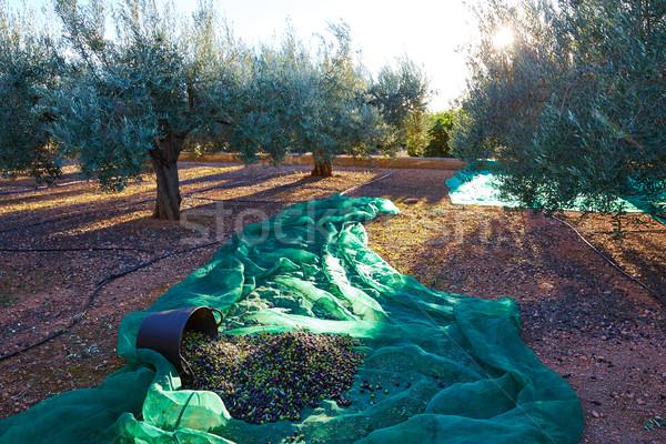 Olives texture récolte net alimentaire Photo stock © lunamarina