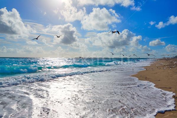 歌手 島 ビーチ 手のひら フロリダ カモメ ストックフォト © lunamarina