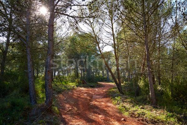 Hegyek Valencia fenyőfa erdő Spanyolország tájkép Stock fotó © lunamarina