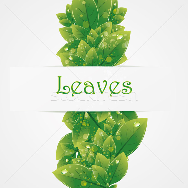 Verde natureza folhas vetor alto Foto stock © Luppload