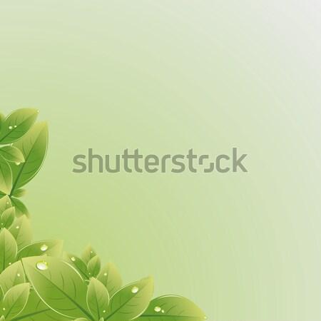 зеленые листья текстуры высокий разрешение изображение иллюстратор Сток-фото © Luppload