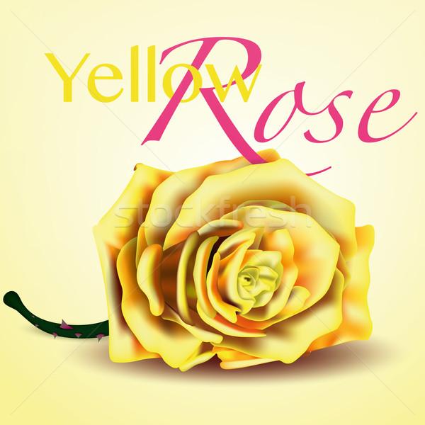 Kart sarı vektör gül beyaz resimli Stok fotoğraf © Luppload