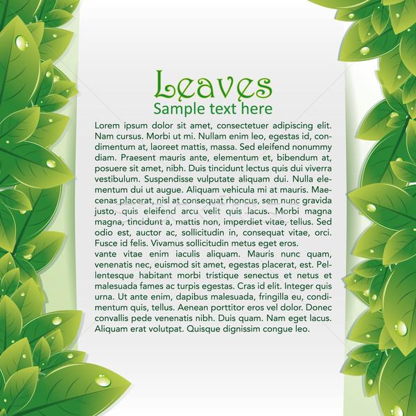 Abstrato verde folha alto imagem Foto stock © Luppload