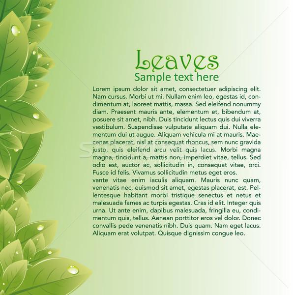 Zöld levelek absztrakt brossúrák magas döntés kép Stock fotó © Luppload