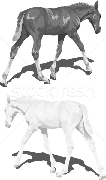 Stock photo: Black and white foals with shadows