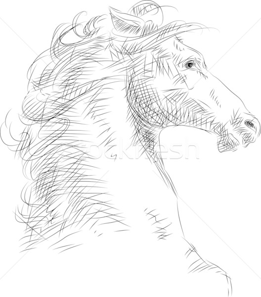 Stockfoto: Paard · hoofd · vector · schets · boerderij · zwarte