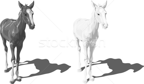 Black and white foals with shadows Stock photo © LVJONOK