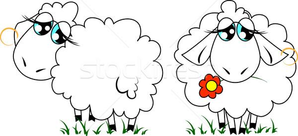 2 かわいい 羊 単純な 草 フィールド ストックフォト © LVJONOK