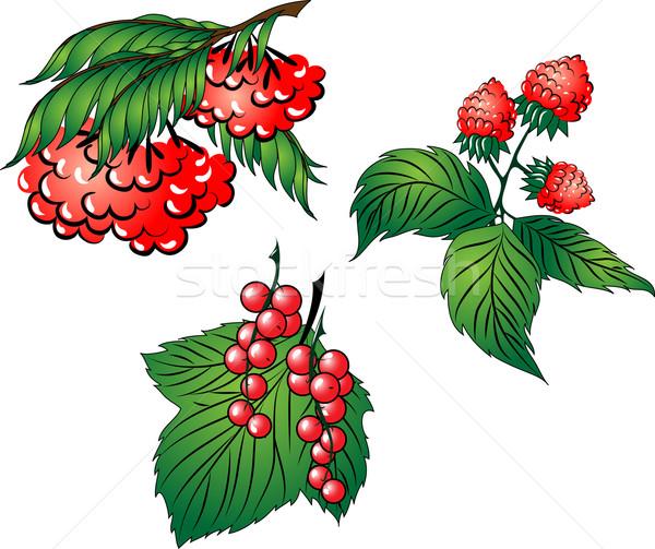 Set rosso frutti di bosco tre foglie Foto d'archivio © LVJONOK