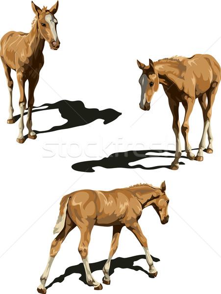 Three views of foal with shadows Stock photo © LVJONOK