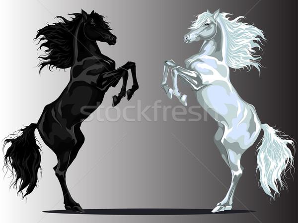 Hátsó lovak kettő fekete vs fehér Stock fotó © LVJONOK