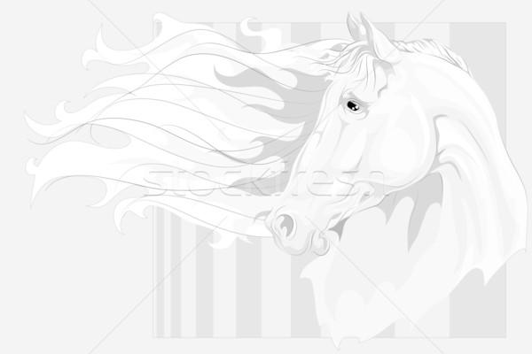 Fej fehér ló hosszú nem gradiensek használt Stock fotó © LVJONOK