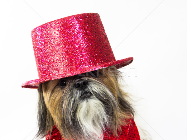 Dog in a Red Top Hat Stock photo © LynneAlbright