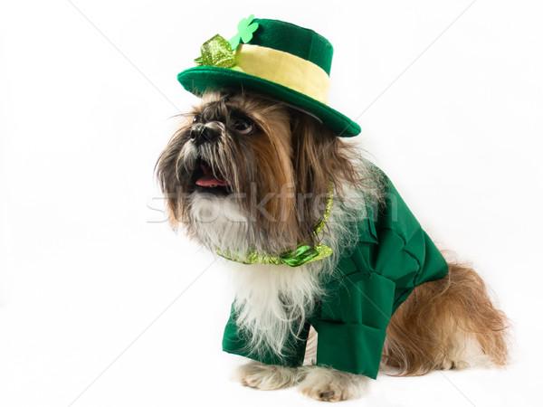聖パトリックの日 犬 帽子 アイルランド ストックフォト © LynneAlbright